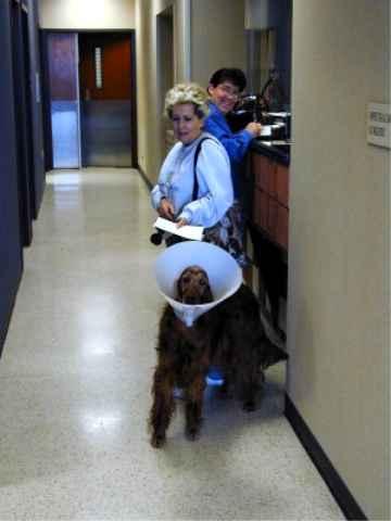 Dog Cataract Example Animal Ophthalmology Clinic