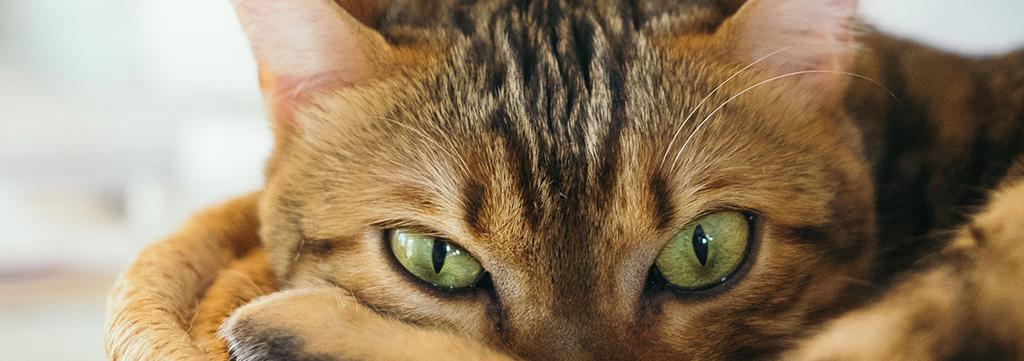 Cat-Eye-Doctor-Dallas