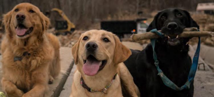 ACVO Service Dog Event