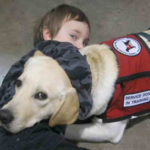 Service dog eye exam