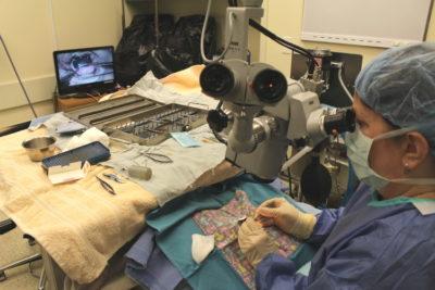 Animal Eye Surgery